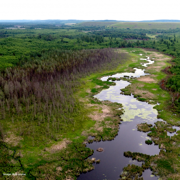 River near polyMet tailings dam - credit Rob Levine