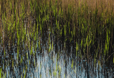 photo of a wetland